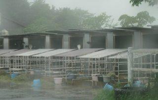 コブクロゆかりの地静岡 富士山麓「乳搾りをした牧場」